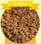 Two Row Malt Barley